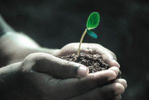 Kinderhände die Erde in der Hand halten