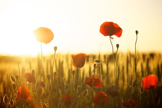 Eine Blumenwiese im Sonnenuntergang